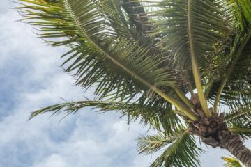 Florida Palm Tree Health Insurance